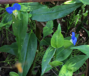 Floweryatsude